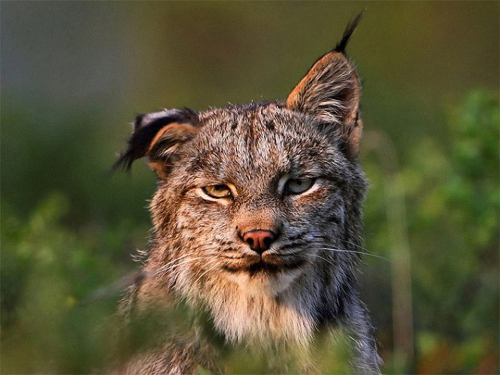 Утренняя порция смеха звери с бодуна