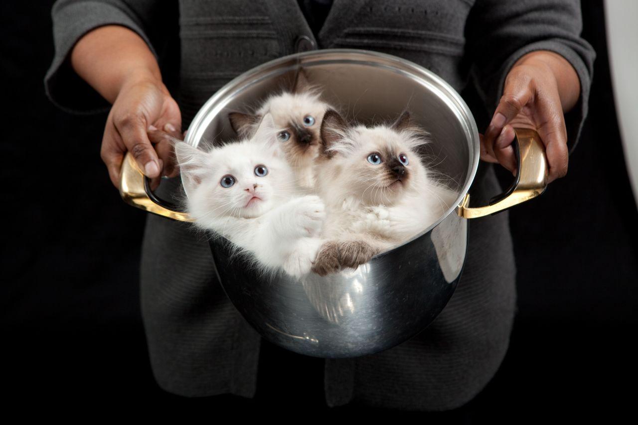 Суп с котом и пирожки с котятами. Шокирующие кулинарные традиции Китая.