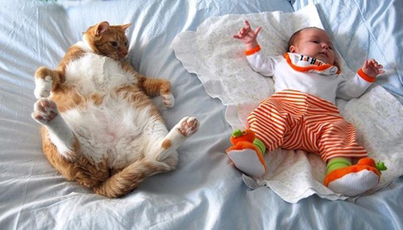 cats 8 25 кошачьих поз для сна