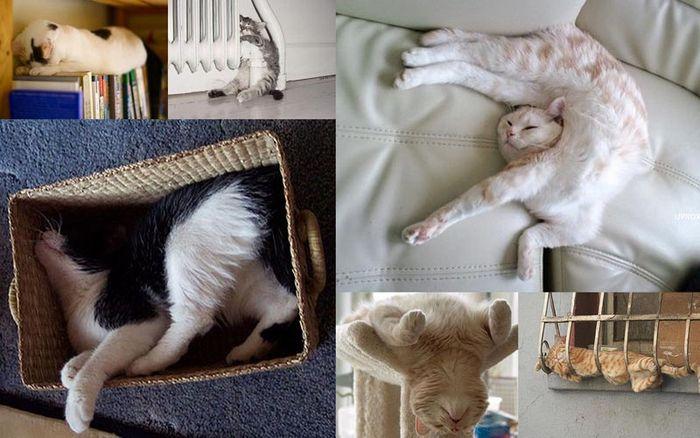 СПЛОШНОЕ УМИЛЕНИЕ! Как спят коты