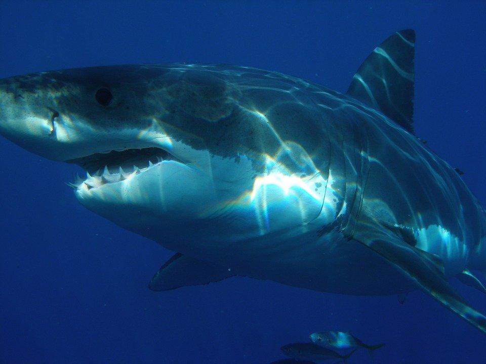 Ученые рассказали, как эволюция сказалась на осязании и зрении акул