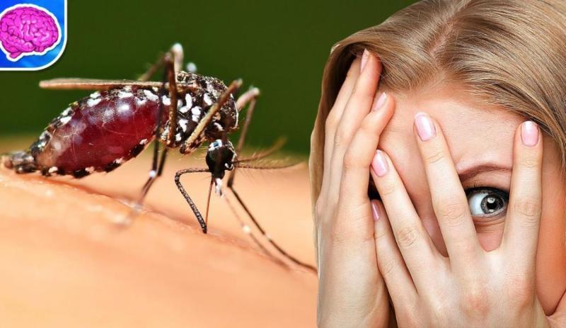 Кого комары кусают чаще и почему?