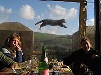 забавные моменты из жизни кошек