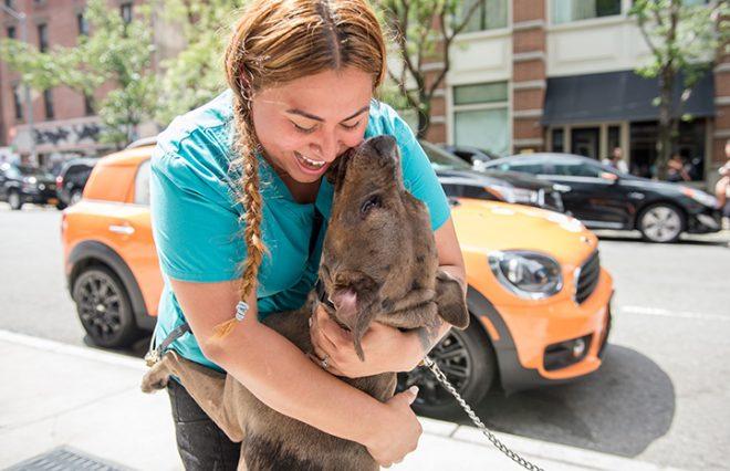 «Это она!» На фото была собака, в которой женщина узнала пропавшего питомца