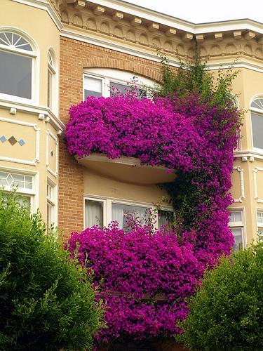 балкончики в цвету
