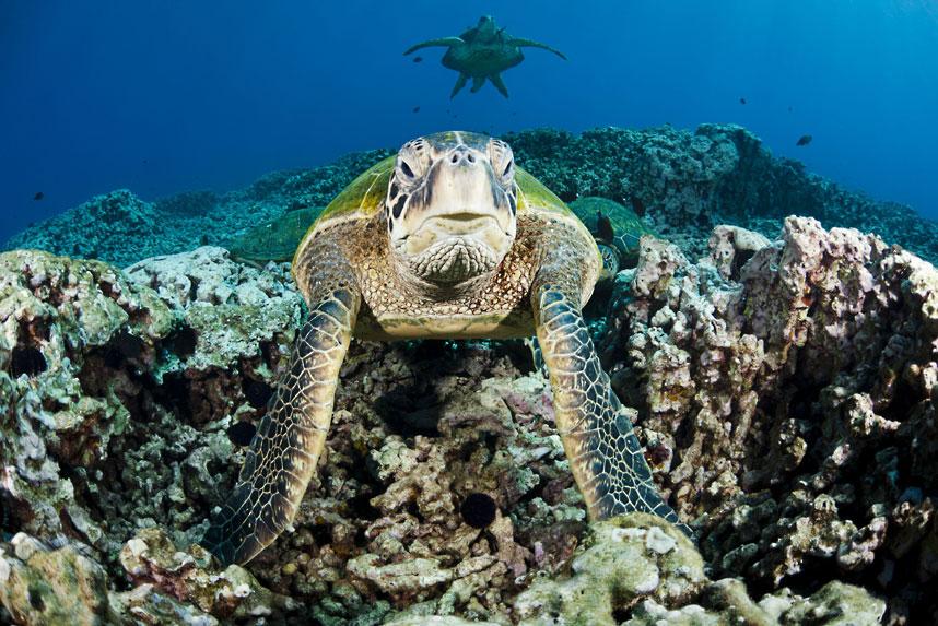 782 Жизнь в океане   подводные фотографии Дэвида Флитэма