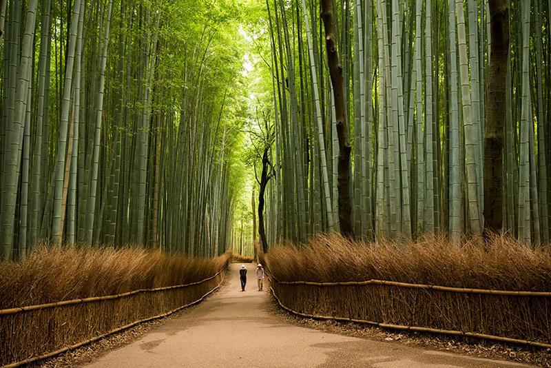 Восхитительная Япония