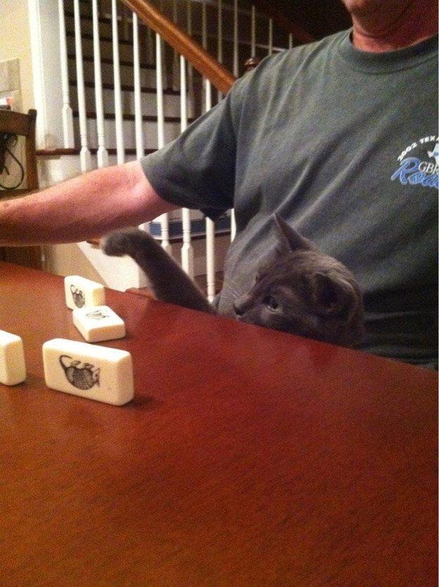 Фотографии котиков, которые растопят ваше сердце
