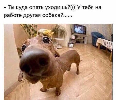 Куда ты опять уходишь?))))