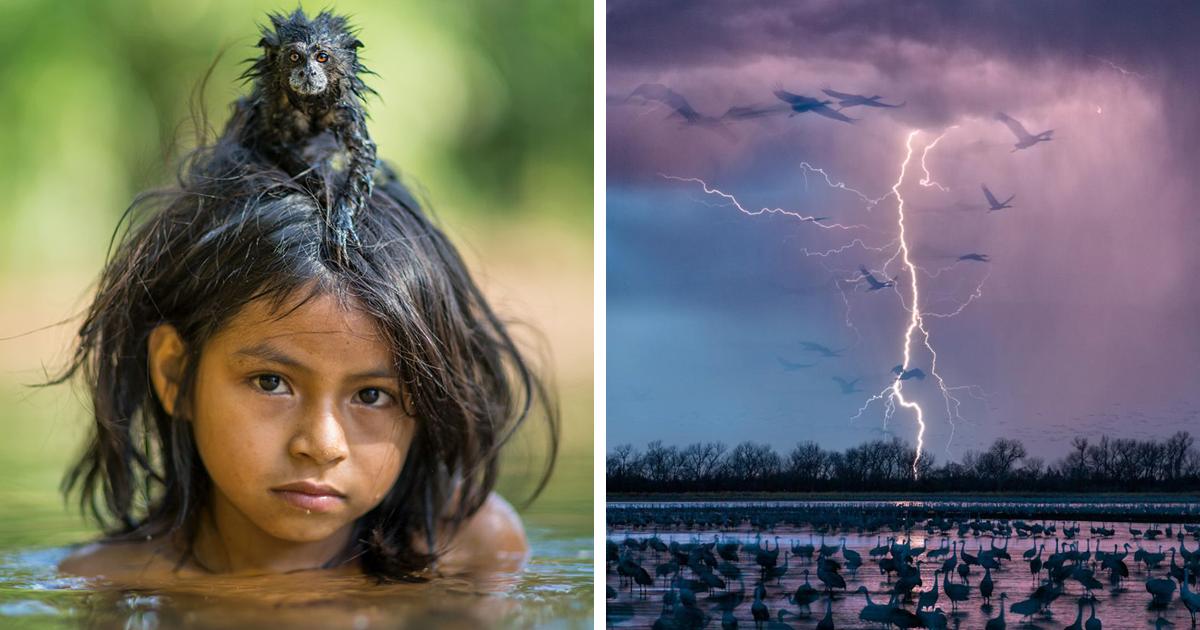 50 лучших снимков года по версии журнала National Geographic (51 фото)