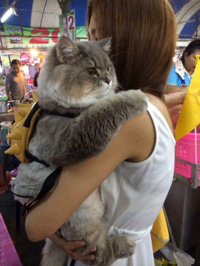 Бон-Бон – таиландский пушистый питомец… с рюкзаком