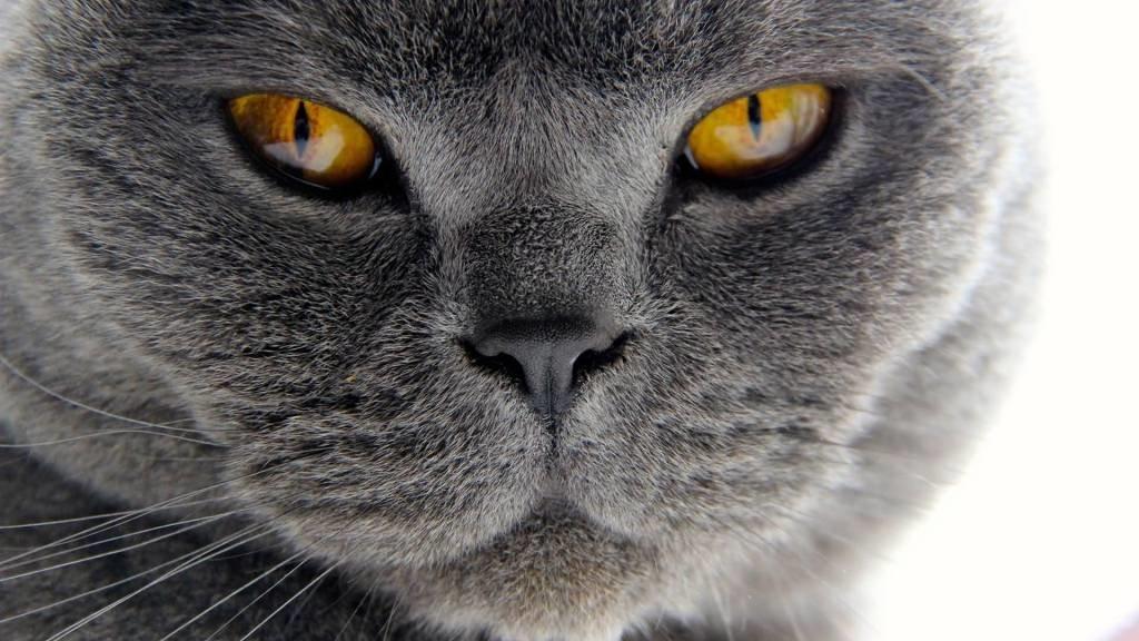 Жизнь на 2 семьи до добра не доведет Или история про то, как наш кот чуть не вляпался по-крупному!