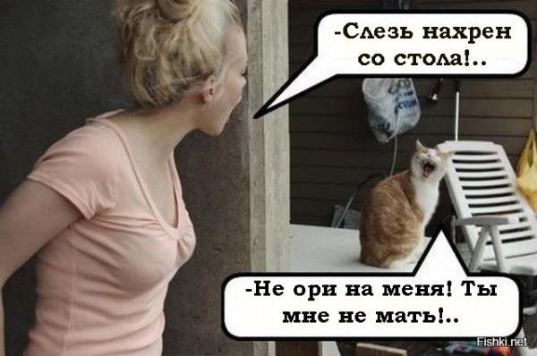 Кем нас считают кошки? Импринтинг у кошек.