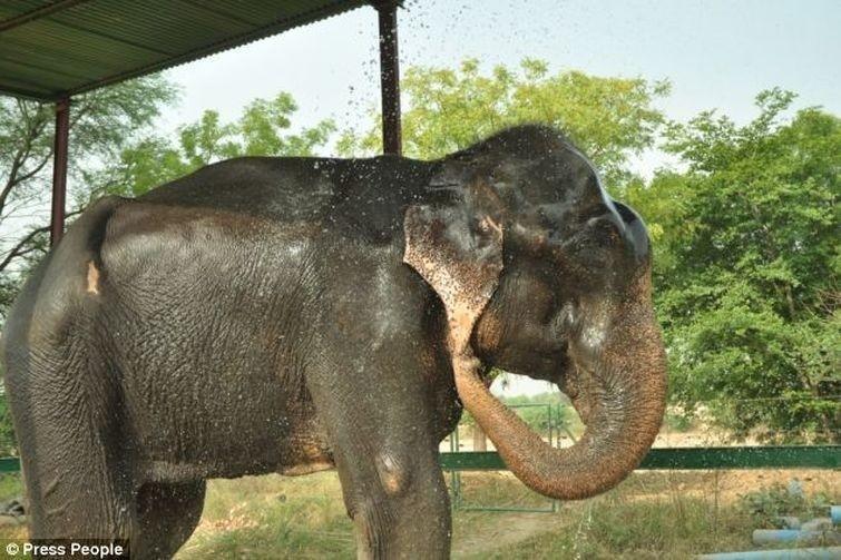 Radga10 Спасение слона, проведшего 50 лет в неволе, который плакал от счастья