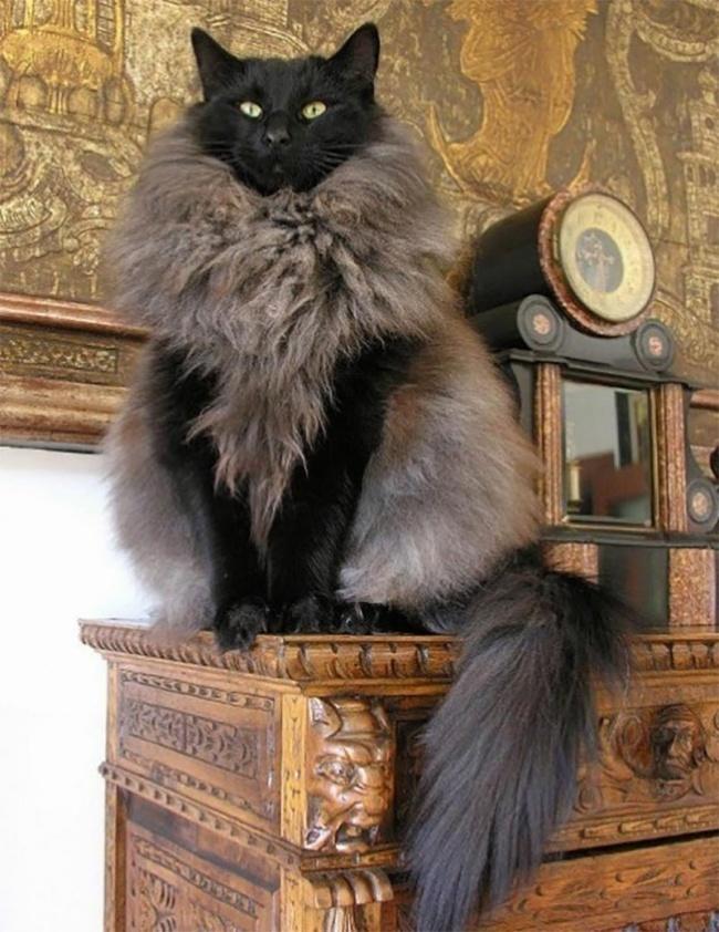 24 кота, которые подняли дер…