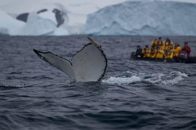 16. Встреча с китами? антарктида, вопрос, ответ