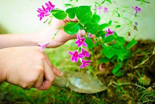 Пять натуральных удобрений для домашних цветов!