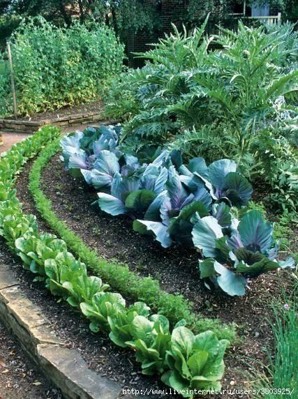 Как увеличить маленький огород. Полезные хитрости.