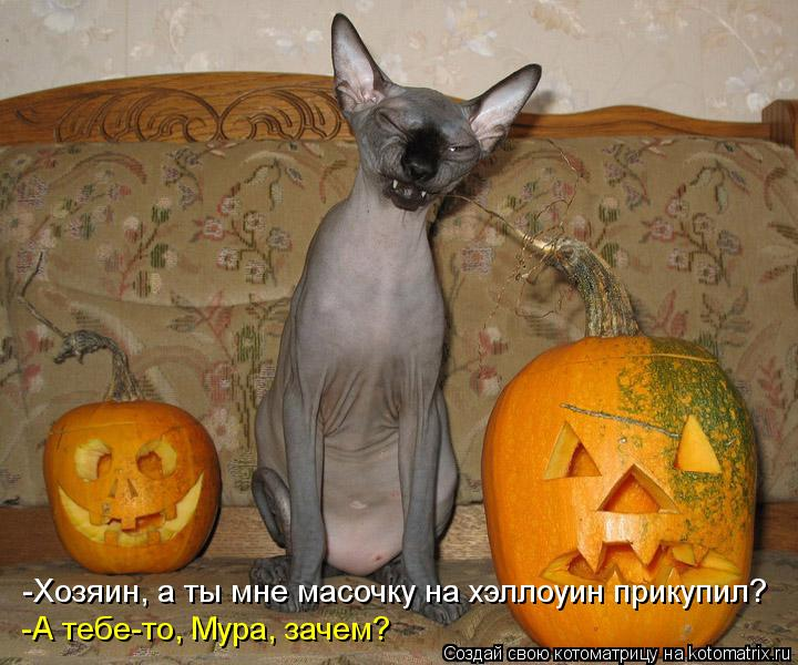 Котоматрица: -Хозяин, а ты мне масочку на хэллоуин прикупил? -А тебе-то, Мура, зачем?