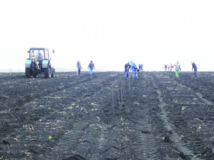 Аграрии Дагестана перевыполнили план по закладке новых садов