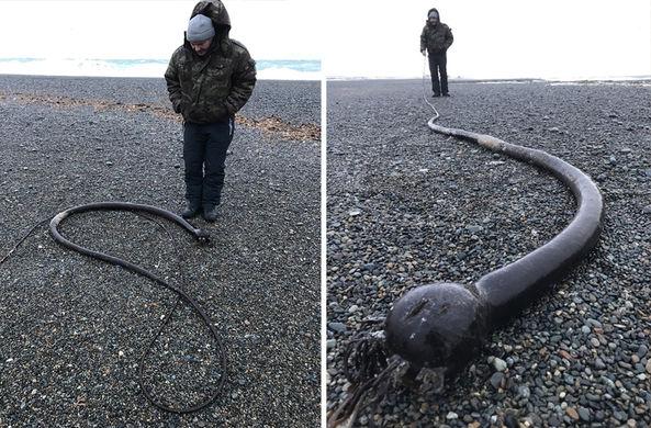 На побережье Чукотки вымыло …