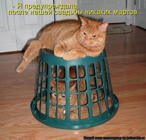 Прикольная котоматрица на Бугаге (31 фото)