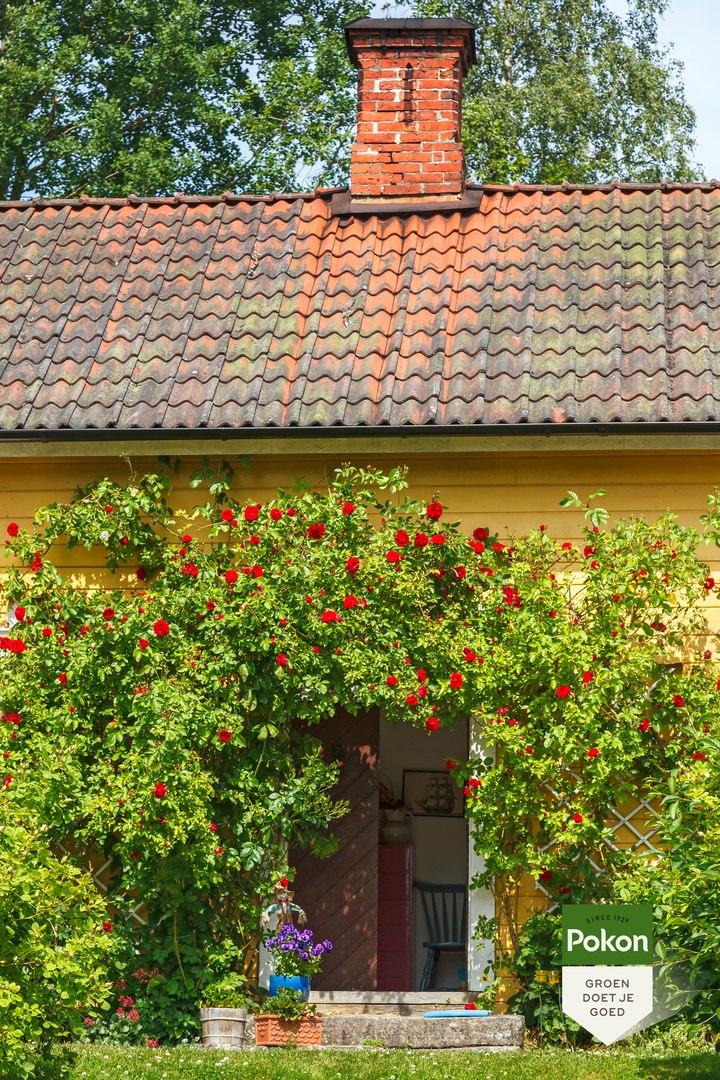 Вьющиеся растения для уюта и радости