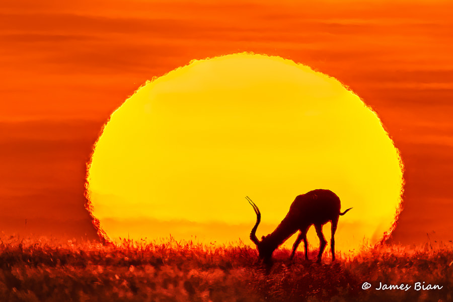 Sunset in Masai Mara by James Bian on 500px.com