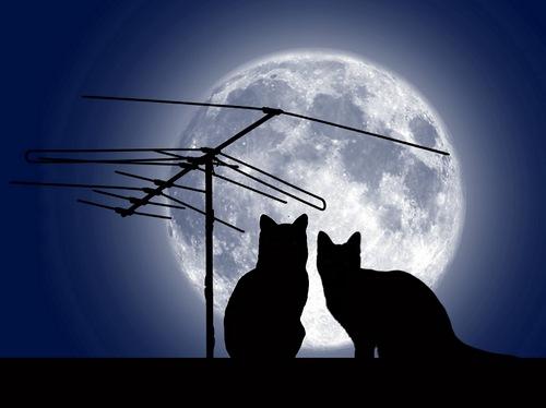 Кошачья сказка о любви... (очень романтично!)