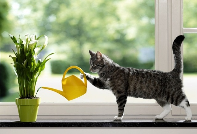 Как поливать цветы, когда вы в отпуске