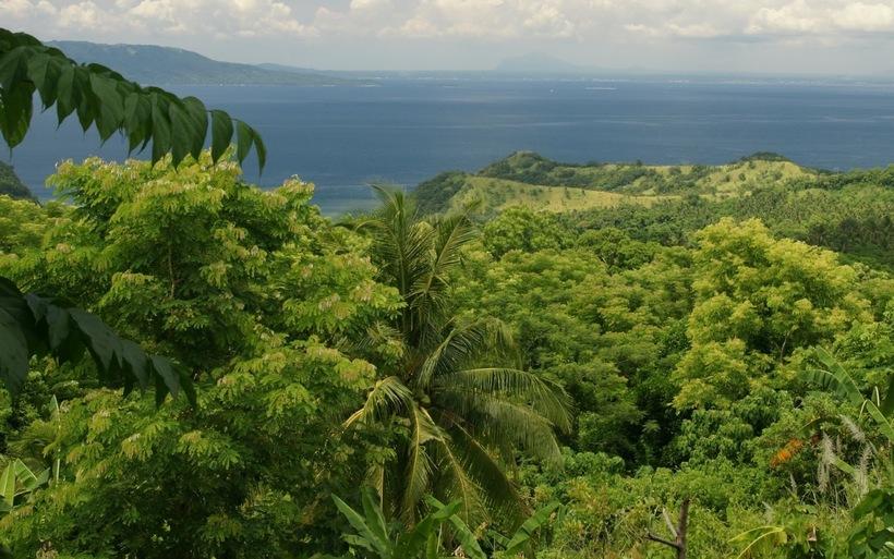 10 деревьев за диплом: на Филиппинах всех школьников обязали сажать деревья