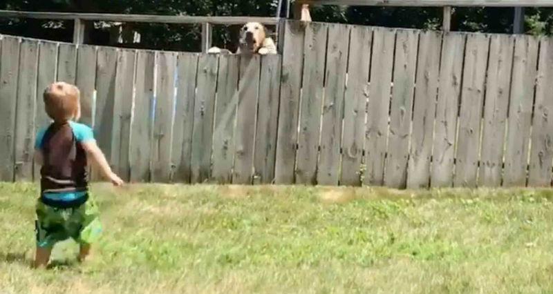 Малыш не мог найти друга и решил попытать счастье за забором