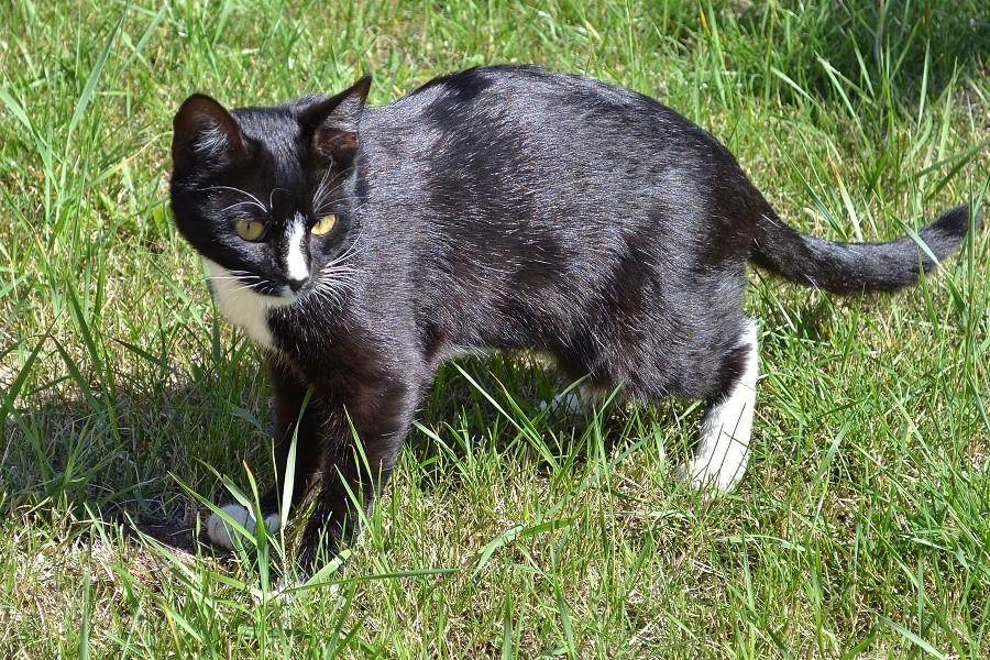 Кот, который огурцы жрет