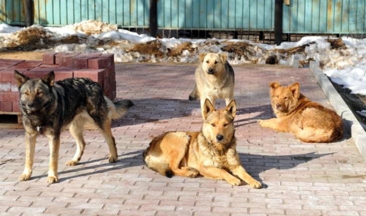 Девушка о жути ненавидела дворовых собак, но они доказали, что достойны любви...
