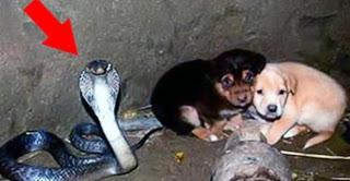 5 самых трогательных и героических поступков животных!