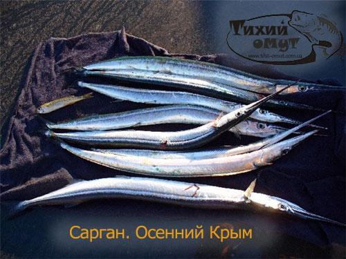 рыбалка на черном море сарган
