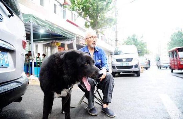 Собака получит все завещанные ей деньги от своего хозяина