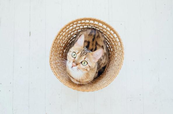 Ласковый кот прервал интервью