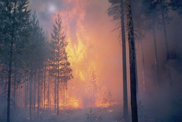 В Сибири опять начались поджоги и нелегальный вывоз древесины в Китай (видео)