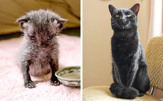 10 историй о животных, с которыми любовь и забота сотворили чудеса