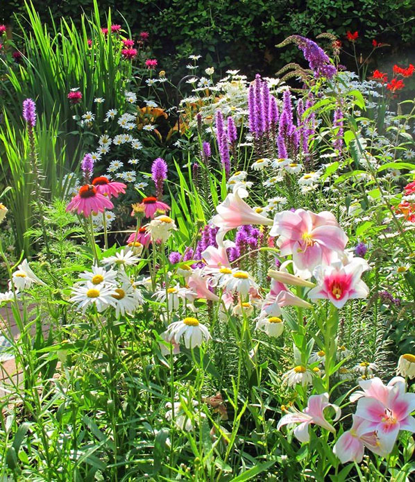 фото редких цветов