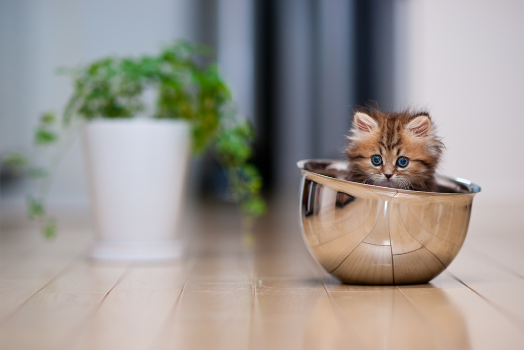 Самый очаровательный котёнок интернета