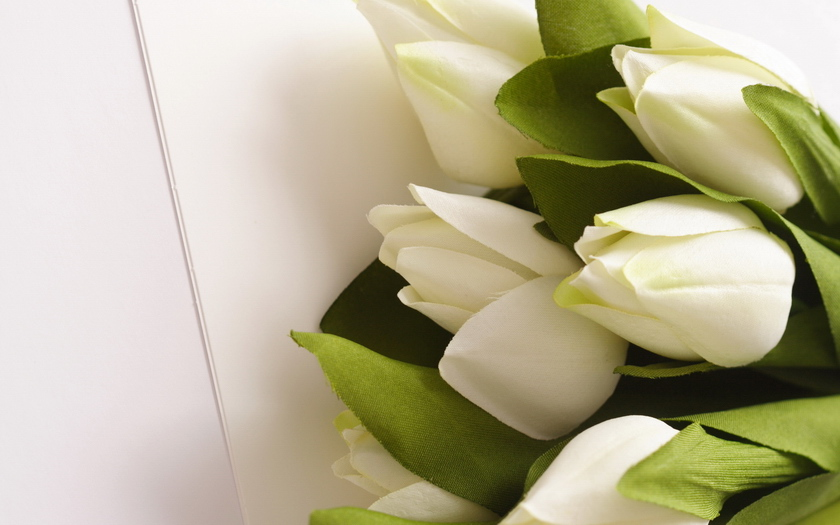 букет, белые, тюльпаны, цветы