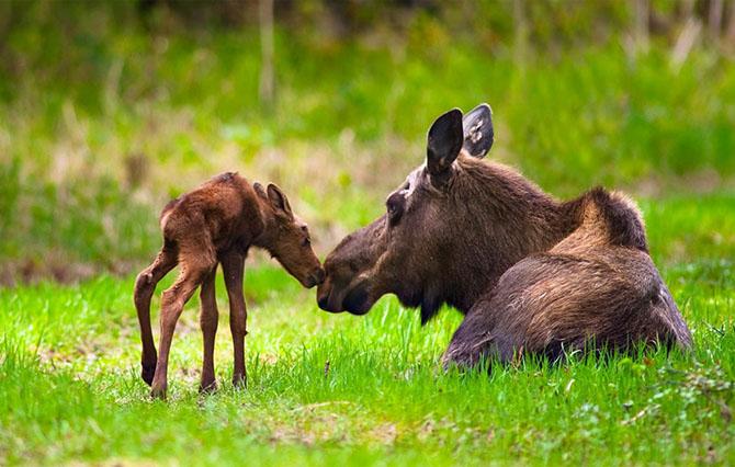 Удивительные фотографии дикой природы Аляски