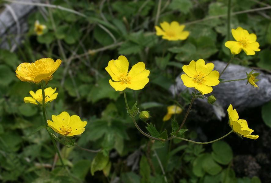 10 самых ядовитых растений нашей планеты Original