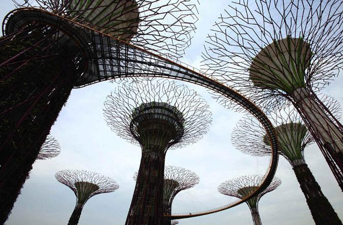 Поразительные деревья в Сингапуре