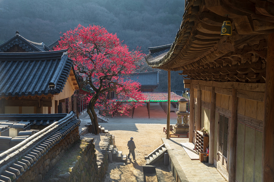 Red temptation of hwaeomsa by jae youn Ryu on 500px.com