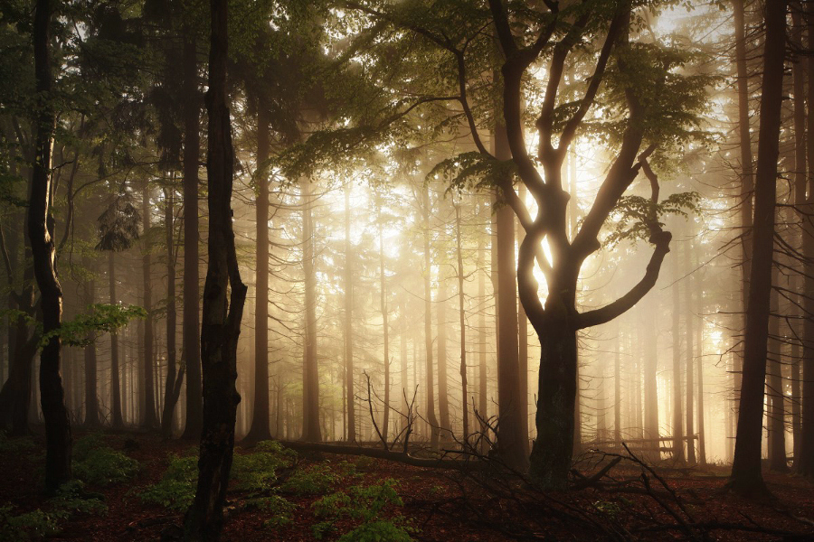 Красота мира в фотографиях Kilian Schönberger