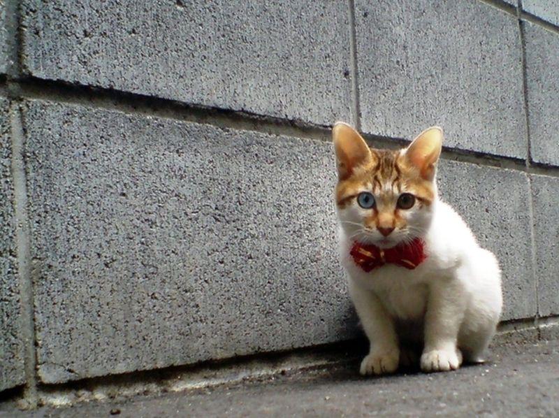 Heterochromia14 Разноглазые кошки