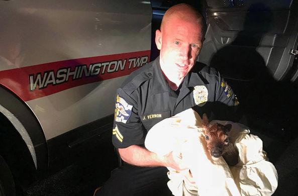 Полицейский сделал кесарево сечение, чтобы спасти олененка